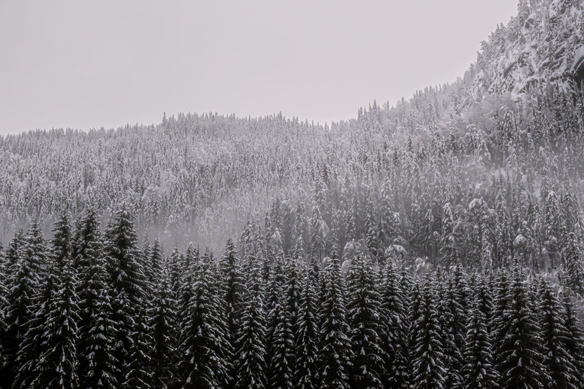 cold snow wood dawn