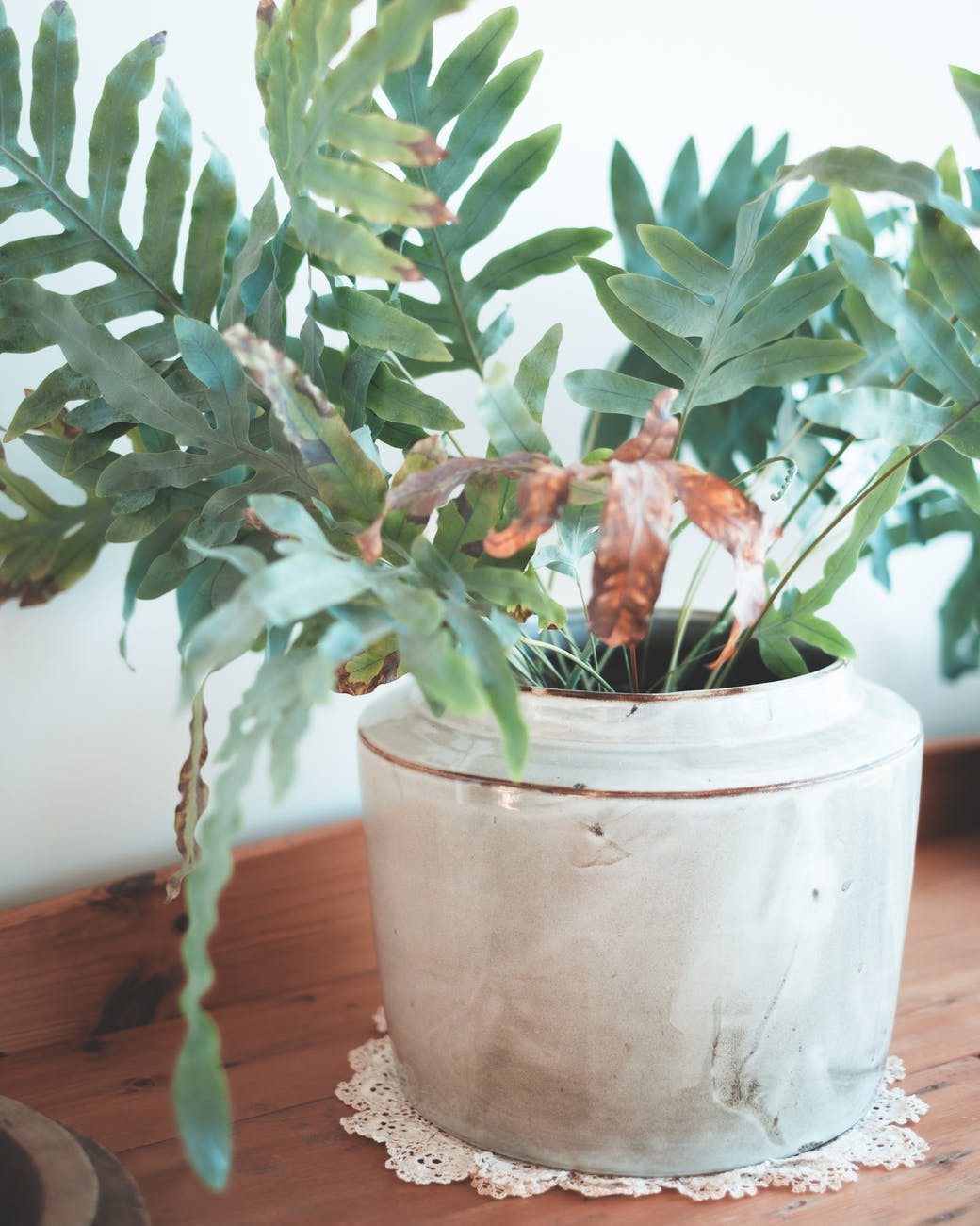 green plant with fresh leaves in ceramic pot