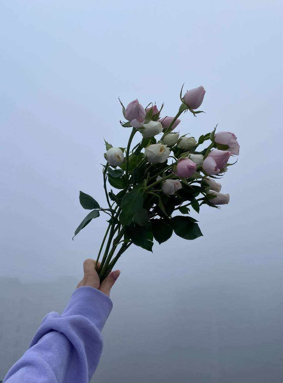 crop woman with roses in misty weather