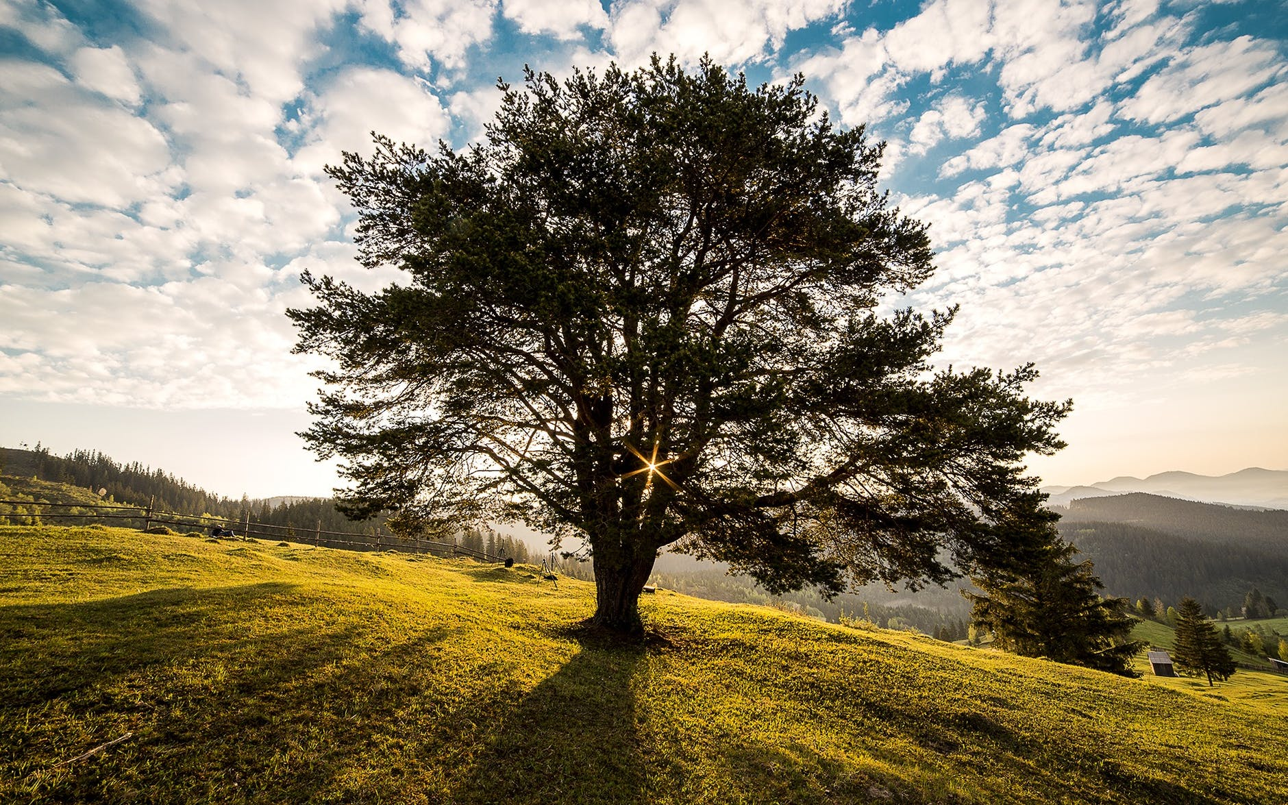 green leafed tree on mountain