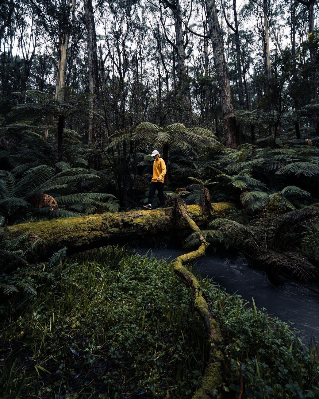 wood landscape water forest
